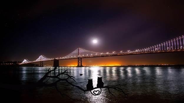 Cheapest way to explore San Francisco